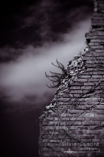 Ancient crumbled wall - ©Silvia Ganora Photography - All Rights Reserved