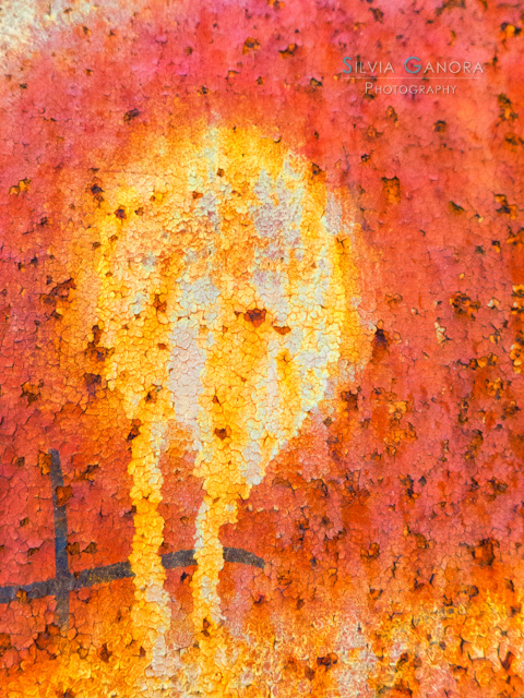 Medusa - ©Silvia Ganora - All rights reserved.