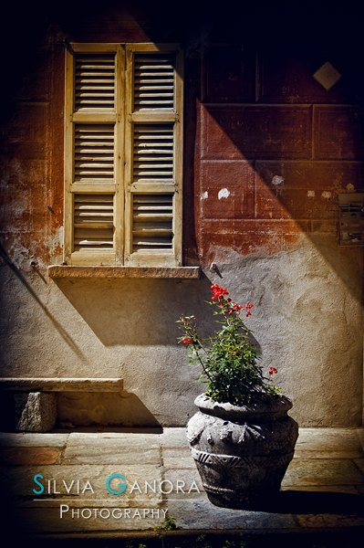 Vase - ©Silvia Ganora Photography - All Rights Reserved