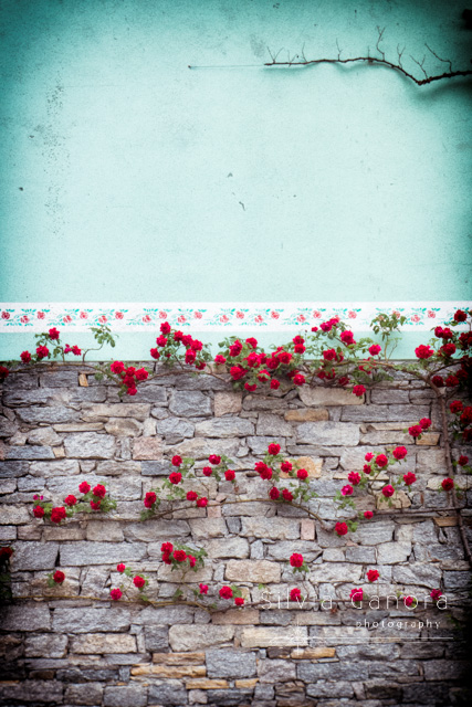 Roses on a stone wall - ©Silvia Ganora Photography - All Rights Reserved