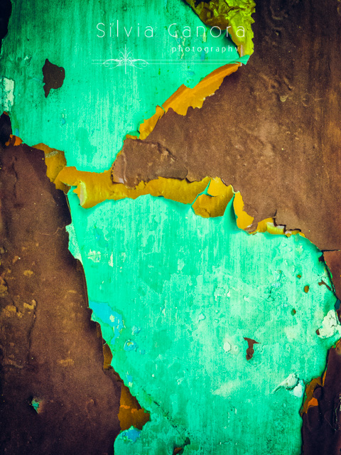 Closeup shot of a crusty and peeling wall with layers of colors resembling americas continents - ©Silvia Ganora Photography - All Rights Reserved