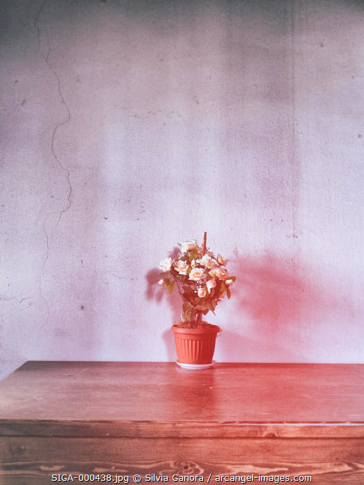 Vase with roses on a wooden table with white wall behind. Washed out colors and toy camera feel©Silvia Ganora Photography