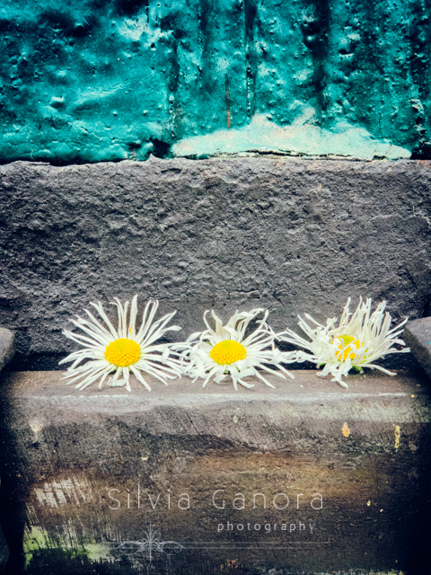 Closeup shot of three daisies stuck in a door's iron lock- ©Silvia Ganora Photography - All Rights Reserved