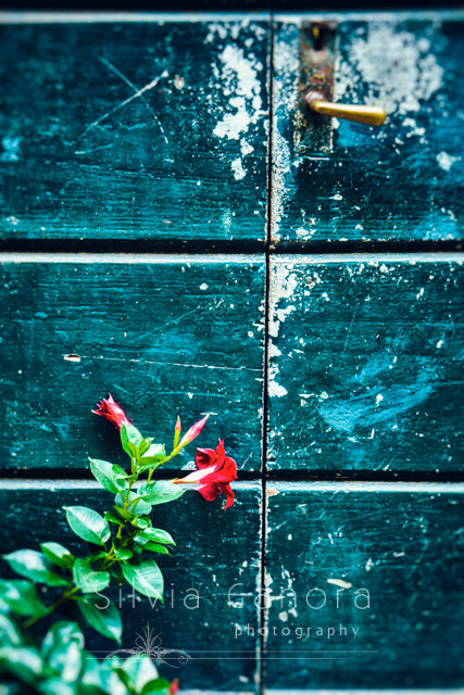 Plant with red flowers leaning against green, decayed door- ©Silvia Ganora Photography - All Rights Reserved