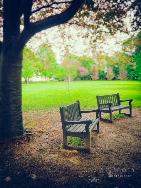 Empty wooden benches under a tree in Spring- ©Silvia Ganora Photography - All Rights Reserved
