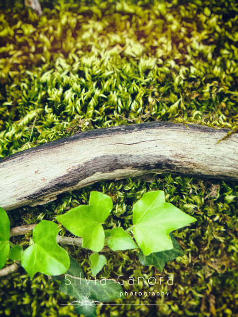 Closeup shot of ivy leaves close to a branch on a carpet of grass and or moss- ©Silvia Ganora Photography - All Rights Reserved