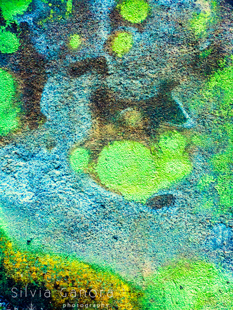 Vivid closeup shot of a colorful wall with blotches of green, yellow and blue- ©Silvia Ganora Photography - All Rights Reserved