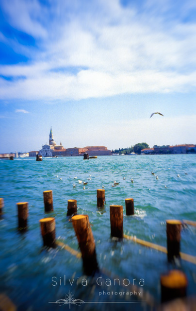 Church of San Giorgio Maggiore, Venice. Sunny day with seagulls on the water and one flying.- ©Silvia Ganora Photography - All Rights Reserved