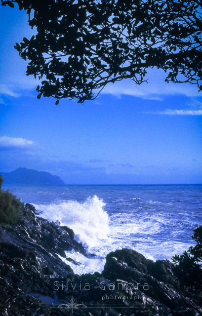 Wave splashing on rocky coast on a summer day. Tree branches leaning over seaview and blue sky- ©Silvia Ganora Photography - All Rights Reserved