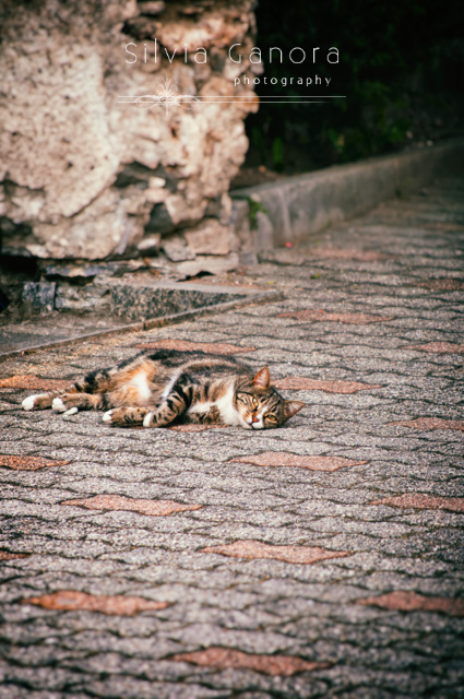 Lovely tabby cat laying on the ground and looking into camera- ©Silvia Ganora Photography - All Rights Reserved
