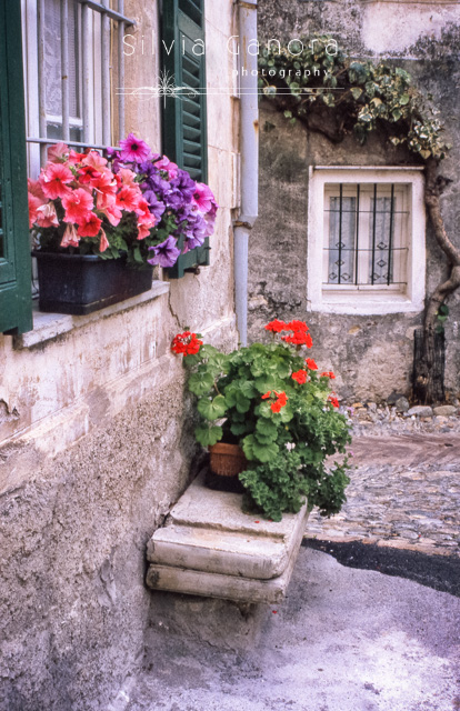 Petunias and geeraniums outside an Italian house- ©Silvia Ganora Photography - All Rights Reserved