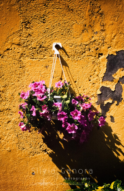 Vase of petunias hanging from yellow decayed wall with long shadow- ©Silvia Ganora Photography - All Rights Reserved
