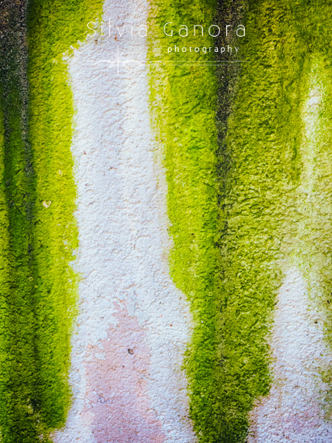 Abstract shot of a rotten green and white wall- ©Silvia Ganora Photography - All Rights Reserved