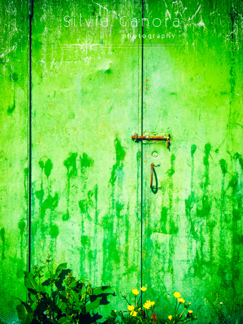 Weathered iron door with yellow flowers- ©Silvia Ganora Photography - All Rights Reserved