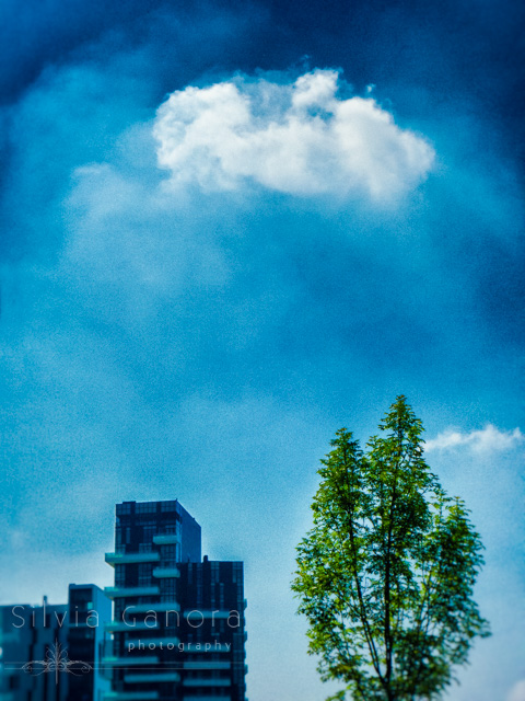 Tree and modern building against blue sky with cloud- ©Silvia Ganora Photography - All Rights Reserved