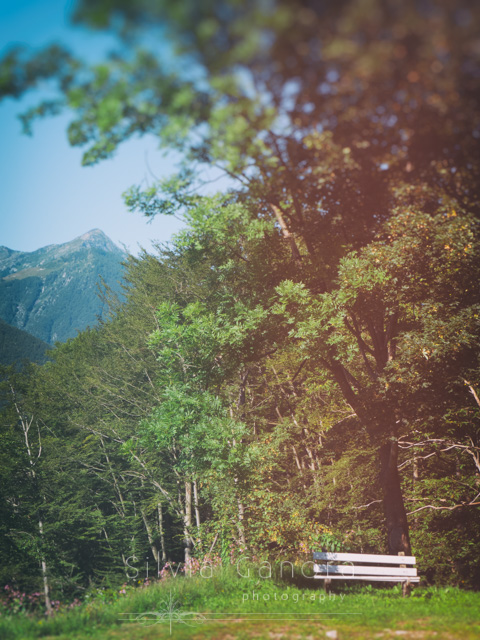Empty bench under a tree in the Alps with toy camera effect and vintage feel - Silvia Ganora Photography