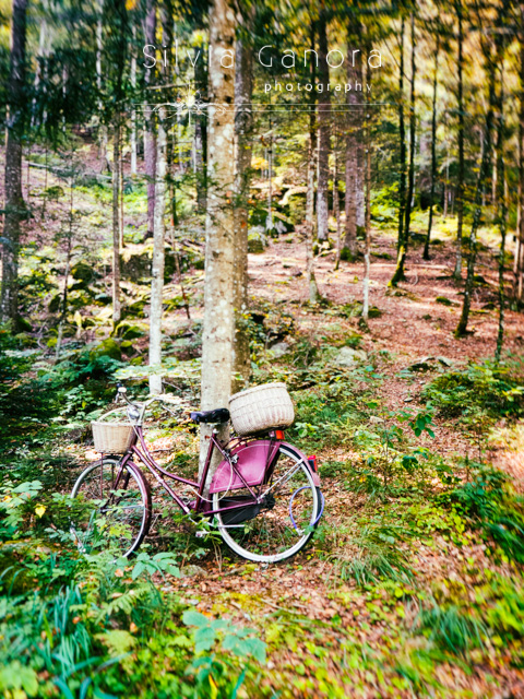 Bicycle with wicker baskets left against a tree in a wood - ©Silvia Ganora Photography - All Rights Reserved