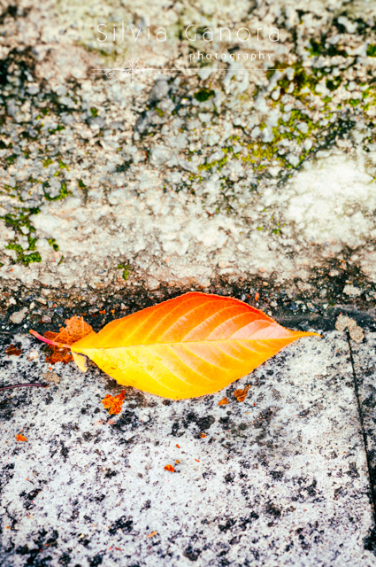 Fallen leaf closeup - ©Silvia Ganora Photography - All Rights Reserve