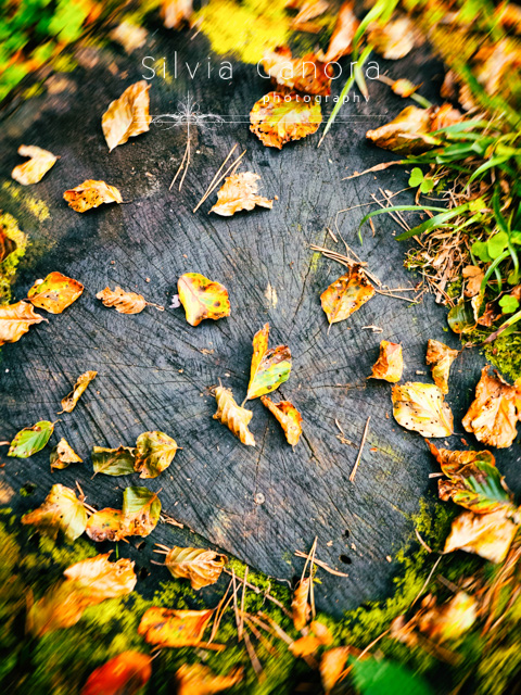 Fallen leaves on a log - ©Silvia Ganora Photography - All Rights Reserved