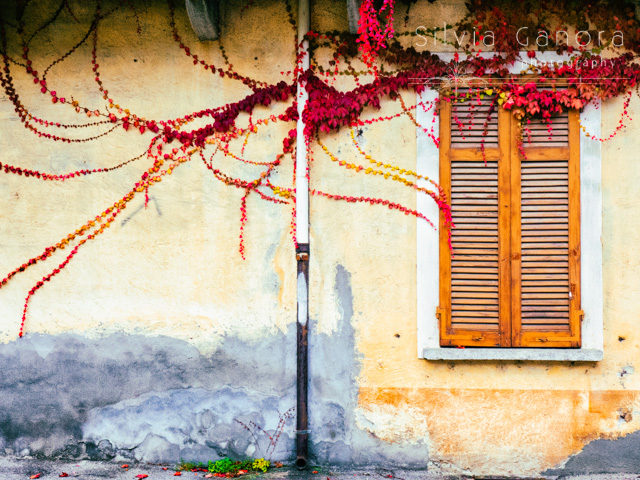Window and red vine on a decayed wall - ©Silvia Ganora Photography - All Rights Reserved