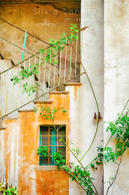 Window and stairs in an abandoned building with rose plant - ©Silvia Ganora Photography - All Rights Reserved