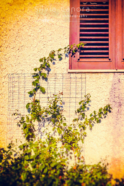 Rose plant, grate and closed shutters - ©Silvia Ganora Photography - All Rights Reserved