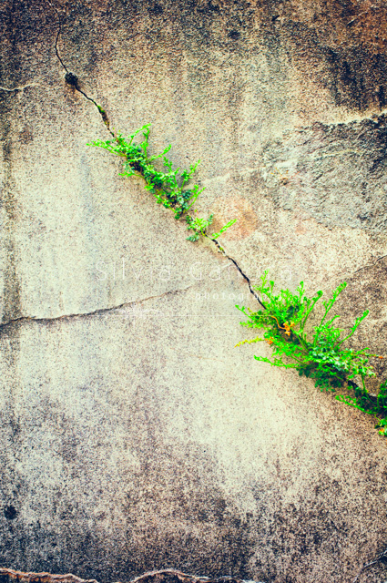 Crack in a decayed wall with green plant grown inside of it - ©Silvia Ganora Photography - All Rights Reserved