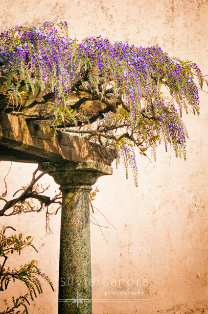 Porch with column and wisteria flowers - ©Silvia Ganora Photography - All Rights Reserved