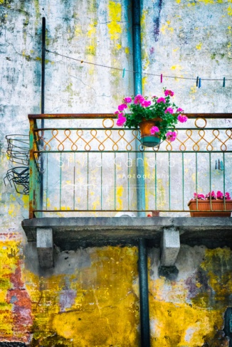 Geraniums on a rusty balcony with decayed wall. Clothesline with pegs  - ©Silvia Ganora Photography - All Rights Reserved