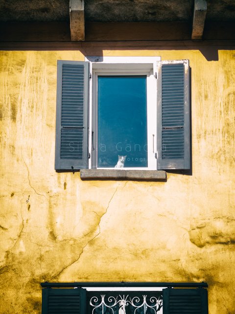 Kitty looking out a window - ©Silvia Ganora Photography - All Rights Reserved