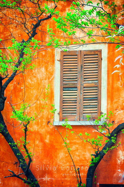 Window with closed shutters on a weatherred wall with tree branches and green laves - ©Silvia Ganora Photography - All Rights Reserved
