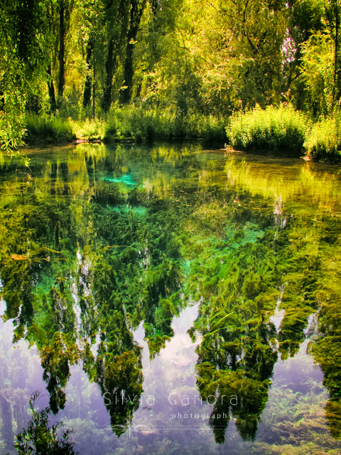Clitunno river springs in Italy with beautiful trees reflecting in calm waters - ©Silvia Ganora Photography - All rights reserved