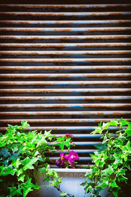 Closeup shot of a rolling shutter with ivy and vase with pink flowers ©Silvia Ganora Photography - All rights reserved