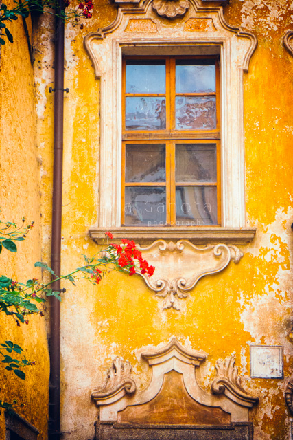 Ornate window on a weathered wall with roses ©Silvia Ganora Photography - All rights reserved