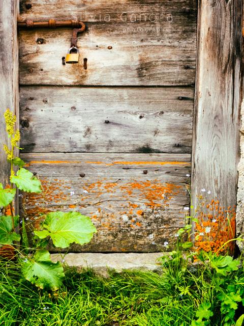 Wooden door with grass -