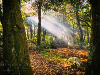 Beam of light in the wood -