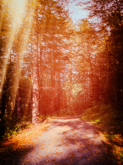 Road in the wood - ©Silvia Ganora Photography - All rights reserved